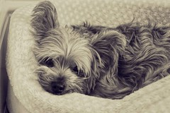 Relaxing Puppy (christinede451) Tags: dog puppy cute reaxing animals