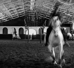 DSC_4232 (saladino85) Tags: animalspeople blackandwhite horses movement skill colors