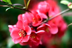 #Hobbyfotografie #Hobbyfotograf #Frühling #Blüte #Blume #Spring #blickwinkel #Canon (nicolewenzel) Tags: hobbyfotografie hobbyfotograf frühling blüte blume spring blickwinkel canon