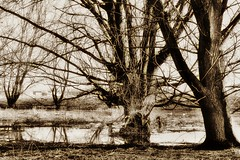 Trees and water (yve_all) Tags: baum bäume trees see lake landschaft landscape biotop natur nature blickwinkel view