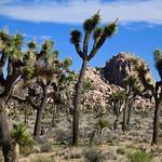 Joshua Tree National Park, CA thumbnail