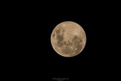 Like an orange peel (Mariano Colombotto) Tags: fullmoon moon luna lunallena night noche astrophotography nikon tucuman argentina ngc infinitexposure autofocus