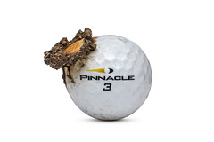 Scorched (Bill Hornstein) Tags: pinnacle ball burned charred fire golf golfball hot melt scorched