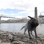 "Dog shaking after swimming • <a style=""font-size:0.8em;"" href=""http://www.flickr.com/photos/28211982@N07/33647521691/"" target=""_blank"">View on Flickr</a>"