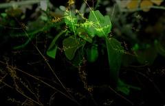 Canon EOS 7D Bernard, Nature art (Sebmanstar) Tags: canon eos 7d france french europe europa digne les bains art creation night nuit creative explore research imagination imagine original photography provence light digital work creatif recherche decouvrir decouverte