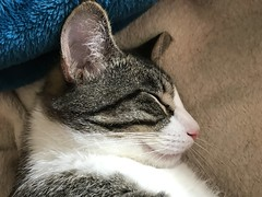 cat sleeping pet smartphone iphone7plus (Photo: Kool Cats Photography over 9 Million Views on Flickr)