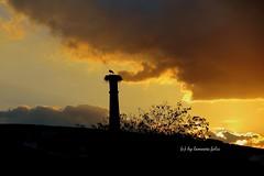 Atardecer en Alameda(Málaga) (lameato feliz) Tags: atardecer alameda torre contraluz color cigüeña