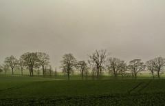 Morning light (Kat-i) Tags: bäume trees natur nature felder fields morgen morninglight dunstig misty grün green rügen insel deutschland germany nikon1v1 kati katharina 2017 mecklenburgvorpommern breathtakinglandscapes