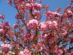 """""""Un raggio di sole è sufficiente a spazzare via molte nubi """" (onDa8) Tags: sole ombra pensiero vitanuova cuore primaveradellanima primavera"""