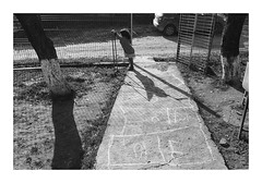 Childhood stories #2 (Florin Aioanei) Tags: angel wings blackandwhite childhood littlegirl street playing romania florin aioanei