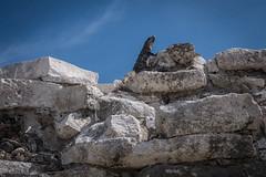 Tulum Ruins-12