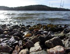 (helena.e) Tags: helenae marstrand västkusten water stone sten shell snäcka alg alger