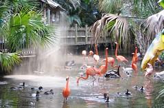 Feeding the birds 6707 (Tangled Bank) Tags: palm beach county zoo animal west florida feeding birds 6707