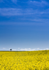 uncropped (markhortonphotography) Tags: countryside surrey northington oilseedrape markhortonphotography spring crop hampshire sky rapeseed fields yellow thatmacroguy clouds