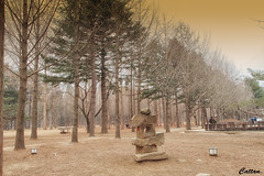 Busan, South Korea (cattan2011) Tags: sculpture busan southkorea travelbloggers traveltuesday travelphotography travel natureperfection naturephotography nature trees landscapephotography landscape