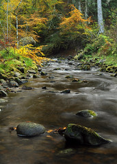 Reelig Glen (Gavin MacRae) Tags: reeligglen reelig reeligglenforestwalk moniackburn kirkhill beauly inverness highlandsofscotland highlandnature highlandlandscape highlands nature nikon autumn autumncolors river scotland