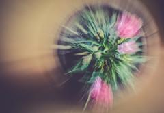 awaken (Ayeshadows) Tags: blur motion flower pot intentional macro