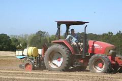 Peanut planting (UGA College of Ag & Environmental Sciences - OCCS) Tags: uga tifton campus peanuts planting