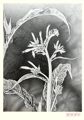Tobacco (Japanese Flower and Bird Art) Tags: flower tobacco nicotiana tabacum solanaceae teruo murase modern lithograph print japan japanese art readercollection