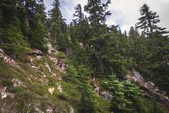 West of the ridge (johnwporter) Tags: hiking scramble climbing mountainclimbing mountaineering cascades mountains nationalforest mtbakersnoqualmienationalforest alpinelakeswilderness wilderness mtprice mountprice 徒步 爬行 攀登 爬山 登山 喀斯喀特山脈 山 國家森林 貝克山史諾夸米國家森林 高山湖泊荒野區 荒野 普萊斯山 labrador blacklab yellowlab 拉布拉多 黑拉不拉多 黃拉不拉多 atx116prodx tokinaaf1116mmf28 wideangle wideanglelens 廣角 廣角鏡