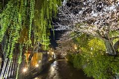 DSC_0241 (燕然) Tags: japan nikon df kyoto arashiyama sakura