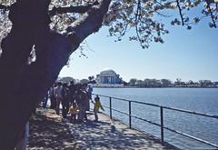 Jefferson Memorial Washington DC 1977 Scanned Image (smata2) Tags: monument canon washingtondc photo dc memorial scanned ektachrome jeffersonmemorial nationscapital minoltascandualiv