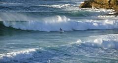 Bronte Surfer (rosiebondi) Tags: ocean surf surfer sydney wave
