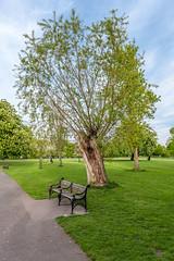 Clissold Park, London (stephanrudolph) Tags: park uk england london nikon gb handheld 2470mm 2470mmf28 d700 2470mmf28g