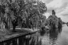 (McQuaide Photography) Tags: blackandwhite bw holland haarlem netherlands monochrome canon eos blackwhite europe nederland dslr uwa wideanglelens ultrawideangle 100d 1018mm mcquaidephotography canon1018mm