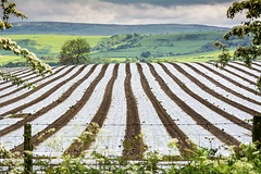 """""""Poly Farming"""" (Pensioner Percy, very slow at the moment) Tags: england countryside farming cumbria fells carlisle armathwaite d7100 tamronsp70300mm pensionerpercy"""