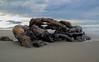 Driftwood on Woodend beach (dehamelstephanie) Tags: newzealand beach canterburynz
