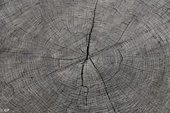 DSC_4213.jpg (Oscar Pirazzo) Tags: wood italy detail oscar nikon italia 18200 marrone legno dettaglio 18200mm d7000 oscarpirazzo