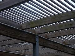 P1030596 (newlightbulbs) Tags: above wood detail lines architecture garden arboretum ceiling planks overhead jcraulstonarboretum