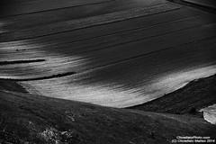 Castelluccio di Norcia (ChinellatoPhoto) Tags: italy colors italia colore umbria fioritura castellucciodinorcia lenticchia