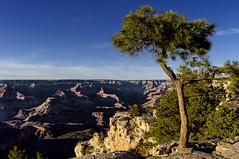 Grand Canyon (BelgiumOnePoint) Tags: arizona usa nature nikon grandcanyon southrim colorefexpro dxooptics d5000