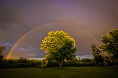 118/365: Random Rainbow (SPT Photographe (seanthibert.com)) Tags: trees light shadow sky sun ontario canada color colour tree green colors grass leaves rain creek canon project shower photography lights evening leaf rainbow day alone colours shadows angle wide sigma east rainy shade lone 365 rainbows outline showers leafs eastern rule sunshower outlined kemptville spt thirds 118 photographe 10mm eveneing