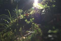 auch Waldboden (ullli23) Tags: gegenlicht