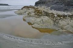 Cox Bay, Tofino (jscott7357) Tags: ocean beach sand sandy shell sealife vancouverisland longbeach tofino mussel intertidal creatures tidal barnacle sandybeach pacificrimpark