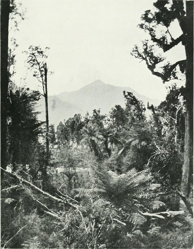 "Image from page 92 of ""Through South Westland : A journey to the Haast and Mount Aspiring New Zealand"" (1900)"