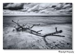 Driftwood 2 (sparkeyb) Tags: longexposure sea bw beach sand nikon