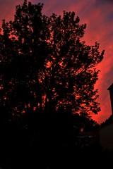 IMG_3352.JPG (Jamie Smed) Tags: trees light sunset sky orange sun tree silhouette geotagged backyard skies sony dslr geotag app 2014 handyphoto iphoneedit snapseed jamiesmed