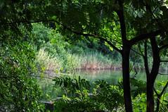 Kleiner Wukensee Through The Trees (james_haliburton) Tags: throughthetrees kleiner wukensee