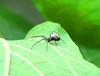 Aranha prateada - Curitiba - Paraná (Eduardo PA) Tags: aranha prateada