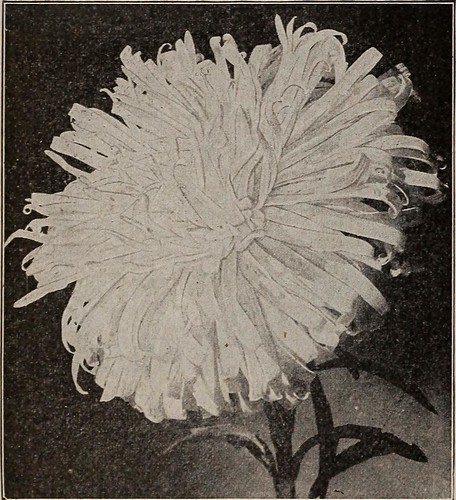 "Image from page 47 of ""Seeds, bulbs, shrubs : catalogue 1914"" (1914)"