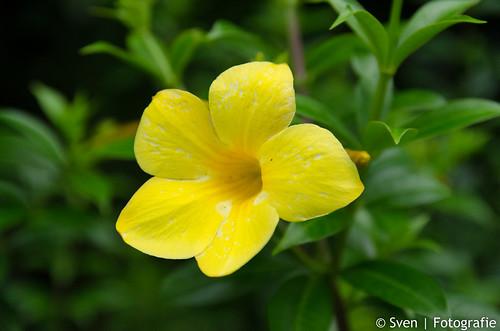 Weer een bloem