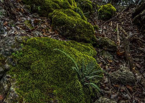 Fern + Moss