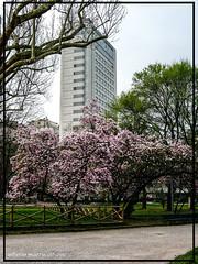 Milano centro svizzero (alberto martucci) Tags: milanoitaliaitalymilanmailamd parco indro montanelli leica digilux2