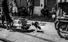 Cock fighting (tumivn) Tags: saigon cockfighting vietnam blackandwhite monochrome a99ii zeiss1635