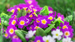 Frühling ist hier