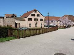 Molsheim parc des Jésuites (OT Molsheim-Mutzig) Tags: molsheim parc nature
